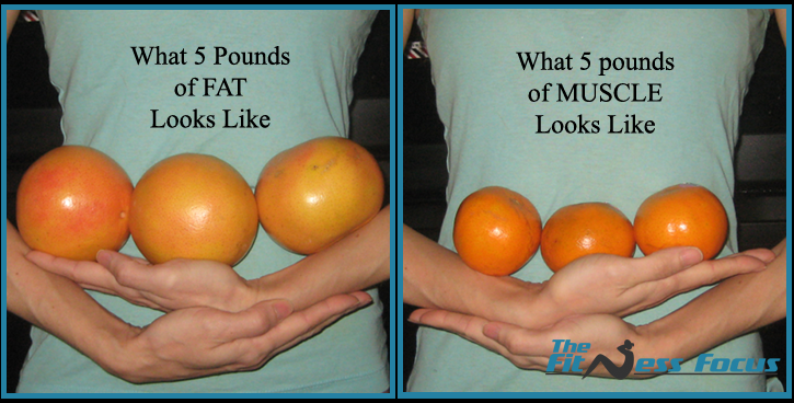 5 Pounds of FAT take up about as much space as three grapefruits. 5 Pounds of MUSCLE take about as much space as three tangerines.